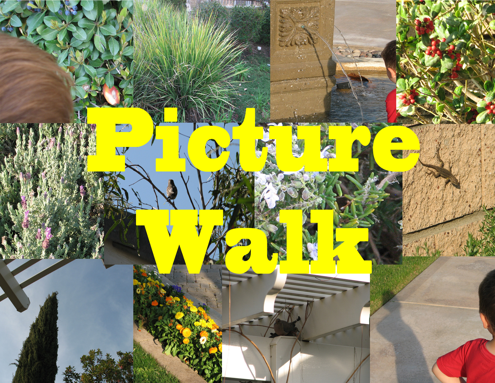#15 — A Picture Walk With My Grandson