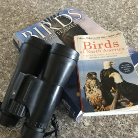 #46–Watching for Birds
